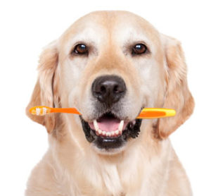 Low Cost Dental Cleaning Services - Camden County Animal Shelter