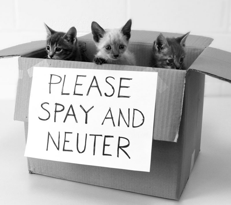 Please Spay and Neuter Your Pets