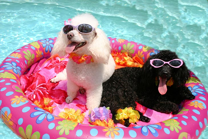 Keep Your Dog Safe & Healthy This Summer