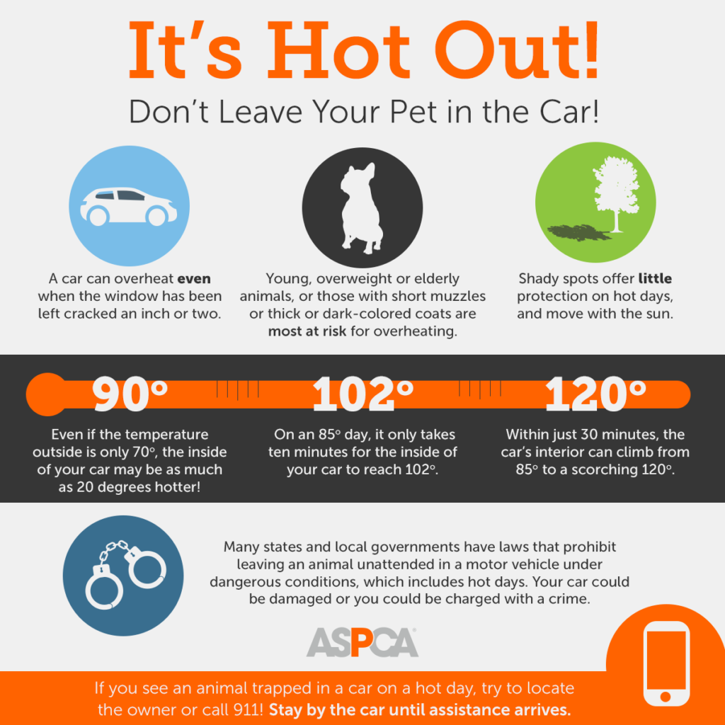 Summer Heat: Don't Leave Your Pets in the Car!