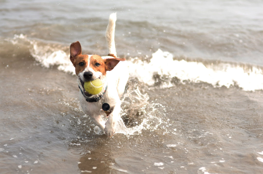 Summer Safety Tips: Taking your Dog to the Beach