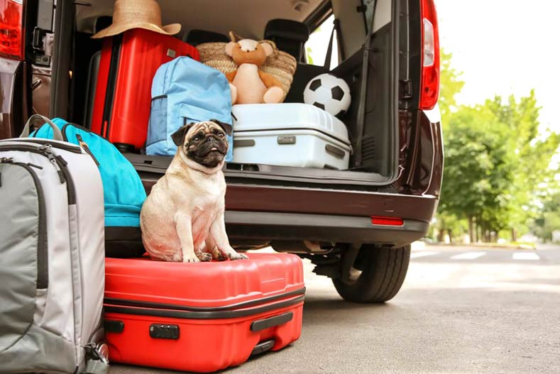Tips for Traveling with your Dog in the Summer
