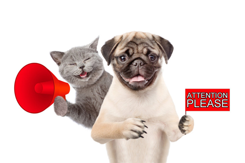 Attention Please: Dog & Cat
