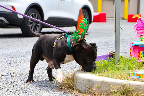 Help Homeless Pets: Christmas in July 2021